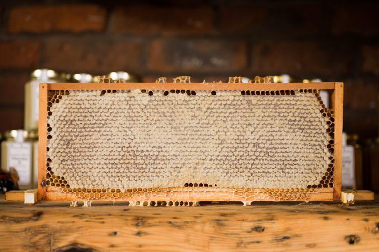 Honey Hive Cassette